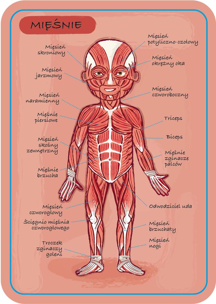 Układanka Magnetyczna Anatomia Człowieka Janod Zabawki Zabawki